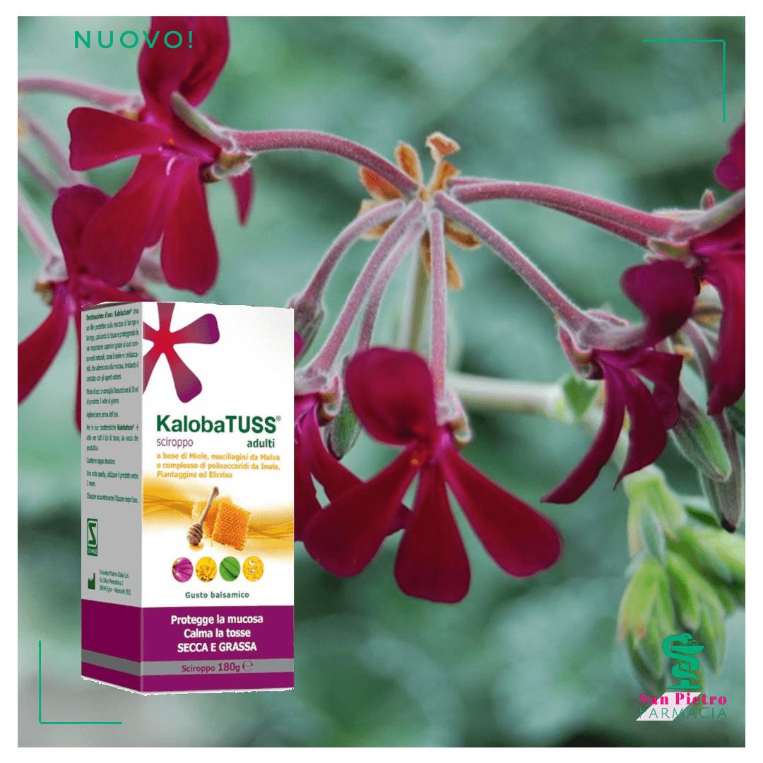 Pelargoium Sidoides pianta medicinale contro le malattie da raffreddamento